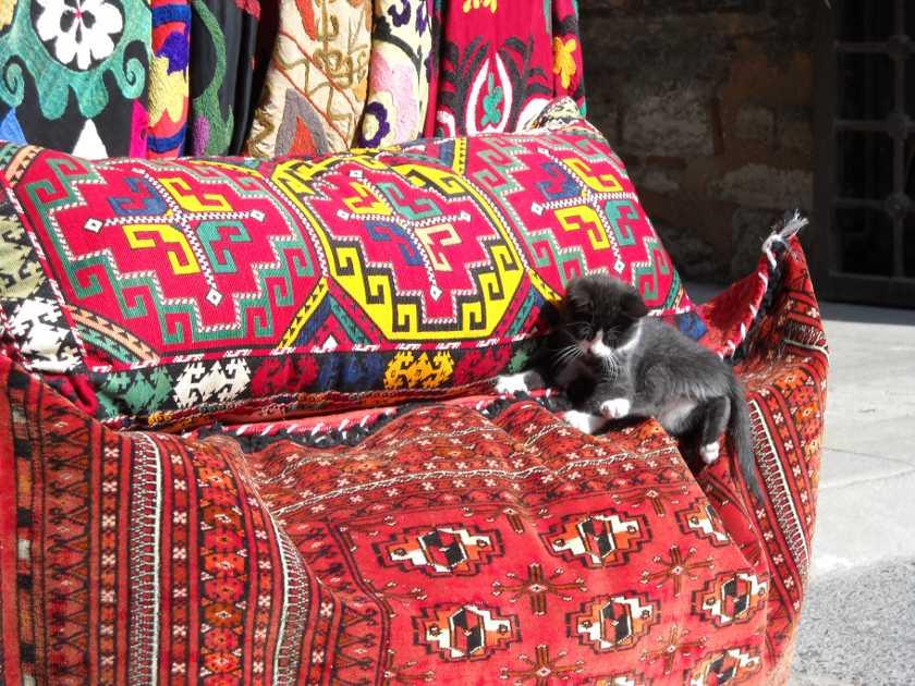 Kleine schwarze Katze auf einem roten orientalischen Kissen in Istanbul.