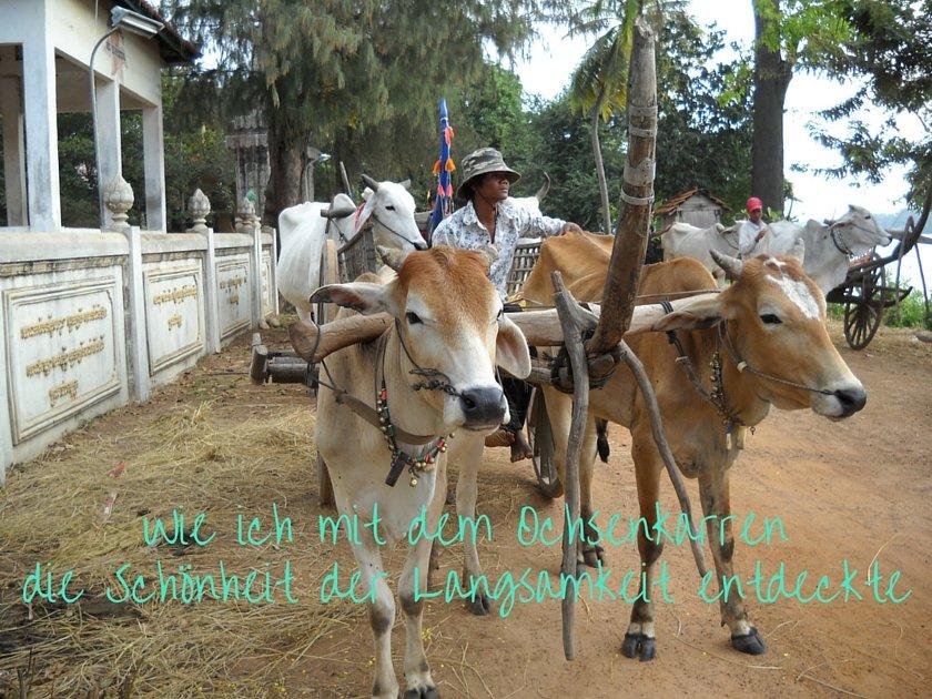 Ochsenkarren Kampong Tralach