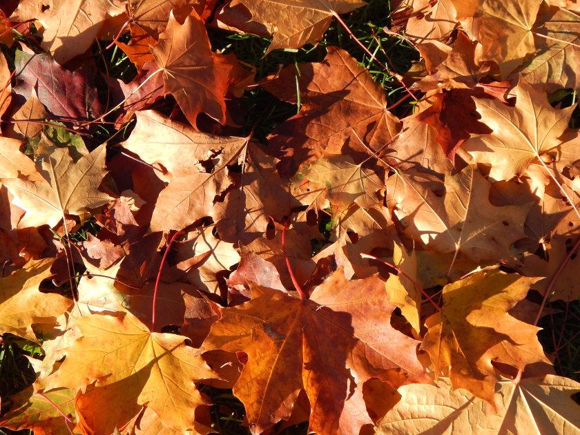 Buntes Herbstlaub am Boden.