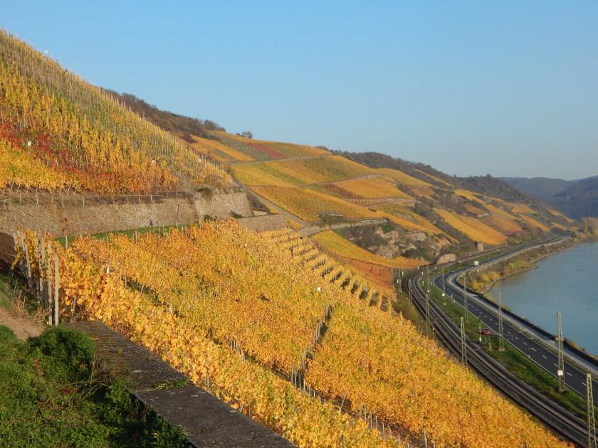 Weinwandern am Rhein, der Weinlagenweg im Bopparder Hamm im Herbst