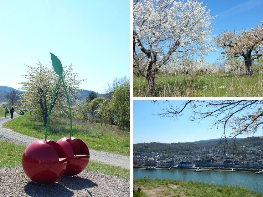Der Kirschenpfad in Filsen, ein Rundwanderweg zur Mittelrhein-Kirsche mit Ausblick.